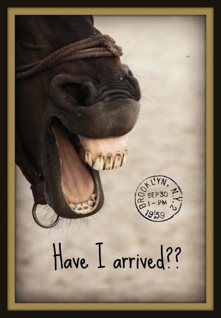 Happy Horse1
